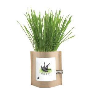 Garden in a Bag | Dog Grass