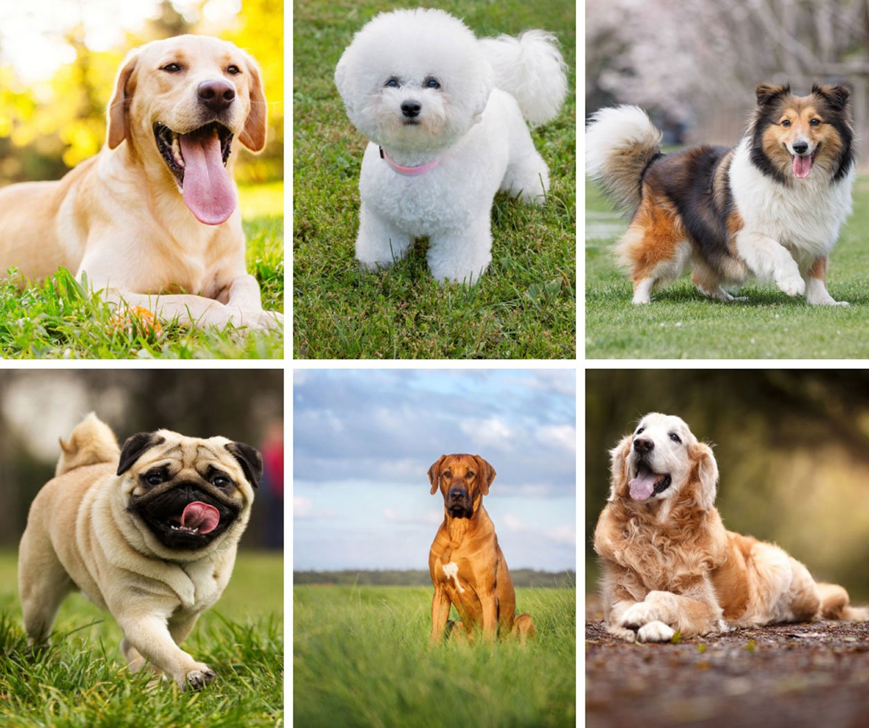 The 10 Best Dogs for Kids